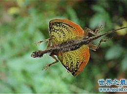 世界飞行蜥蜴排行榜 世界上有飞行蜥蜴