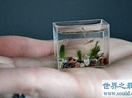 世界上最小的脊椎动物 小到我们几乎很难区分它