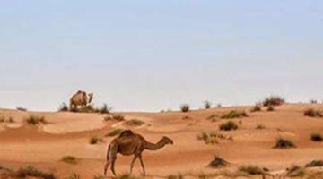 世界十大半岛 第一个面积为322万平方公里的阿拉伯半岛