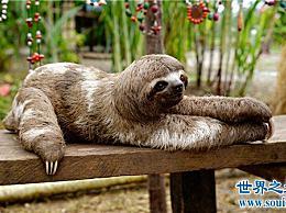世界十大最慢的动物 你见过每分钟走4米的动物吗?