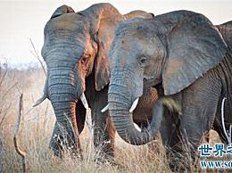 非洲十大神奇动物和非洲最神奇的动物都在这里!