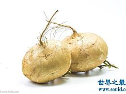 甘薯的功效、功能和禁忌 甘薯营养价值介绍