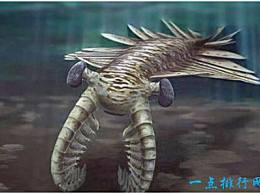 史上最大的虾 这种奇怪的虾有2米长 但只吃浮游生物