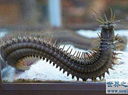 世界上最大的芭比虫大约有3米大