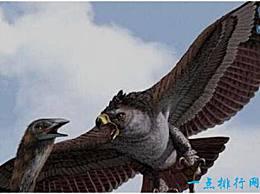 世界上最大的鹰 体长1.4米 翼展3米