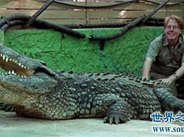 哪种鳄鱼最大?其中一些因为人们的杀戮而找不到