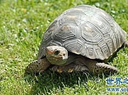 详细的龟版饲养方法 养宠物容易 麻烦少!