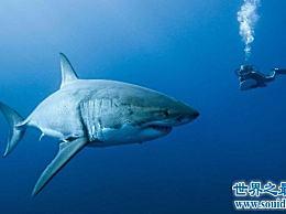 攻击能力最强的十大动物名单必须远离危险等级