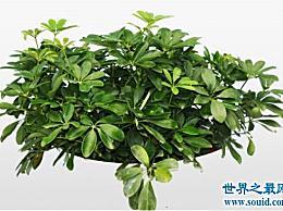 最繁荣的植物 这十种植物可以给家里带来好运!