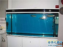 什么是亚克力鱼缸 一种比普通鱼缸更方便的新鲜鱼缸
