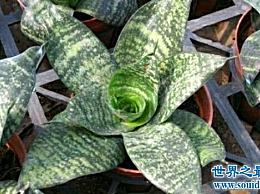 净化空气的植物 把它们放在家里也是一件好事