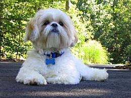 世界上智商最低的狗是一个小专家