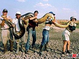 世界上最大的蛇 亚马逊大蟒蛇(10米长 捕食鳄鱼)