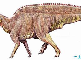 世界最大的史前动物Top10 阿根廷龙(长36.5米,重100吨)排第一
