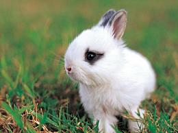 """文殊菩萨给属兔人""""一份大礼"""",必须珍惜,快打开看看!"""