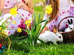 属兔人最新一周事业分析,健康提醒(8.28-9.3)