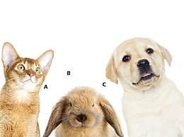 心理测试:哪只动物最呆萌?测你的实力能有多少分