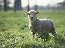 属羊人:12月份喜事到家门,注定穷不过10天,还好我看了
