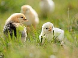小鸡们看过来,四月的喜事让你笑到睡不着!
