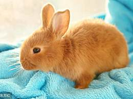 生肖兔的朋友在2018戊戌生肖狗的流年,整体运势比较有利
