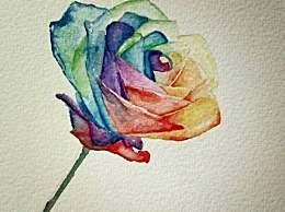 十二星座专属的玫瑰花,天蝎座的最神秘,双鱼座最惊艳