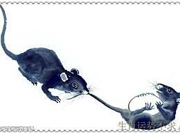 1984年出生的生肖鼠 7月份整体运势