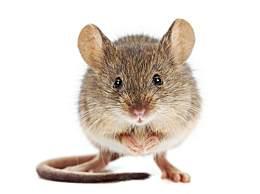 生肖鼠:越老越有钱,后福无穷