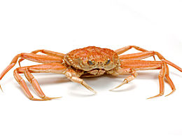 河蟹的做法 姜葱炒螃蟹